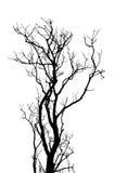 不生叶的树枝抽象背景 库存照片