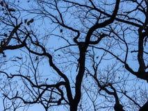 不生叶的树梢 图库摄影