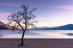 不生叶的树现出轮廓反对日落天空、山、湖和海滩在秋天 图库摄影