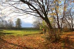 不生叶的树秋天 免版税库存图片