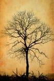 不生叶的树 库存图片