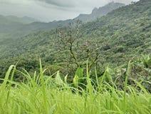 不生叶的树 免版税图库摄影