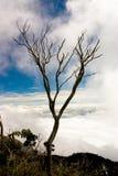 不生叶的结构树 免版税库存照片