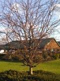 不生叶的结构树 免版税库存图片