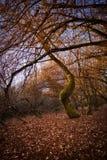 不生叶的结构树 库存照片