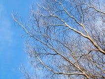 不生叶的结构树 库存图片