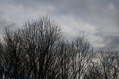 不生叶的黑树冠 库存照片