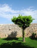 不用灰泥只用石块构造的结构树墙壁 免版税库存照片