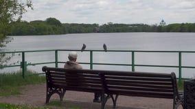 不确定的人坐长凳在莫斯科河附近在Kolomenskoye公园 股票视频