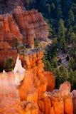 不祥之物在Bryce峡谷 免版税库存照片