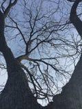 不祥的结构树 图库摄影