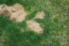 不良状态和需要维护的草坪 库存图片