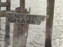 不要喂养鲨鱼 免版税库存照片