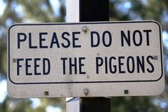 不要喂养鸽子 图库摄影