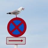 不要喙开放被栖息的roadsign海鸥终止 库存图片
