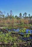 不通的西伯利亚沼泽taiga 免版税库存照片