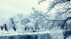 不冻结池塘在冬天 免版税库存图片