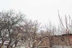 与一个五颜六色的房子的冬天风景在充分一棵美丽的树下雪 免版税库存照片