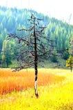 与一个五颜六色的背景的一棵偏僻的树 免版税库存照片