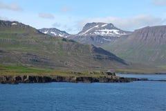 与一个偏僻的房子的冰岛海岸线 免版税库存照片