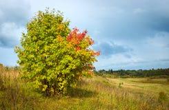 与一个偏僻的洋白蜡树的美好的秋天风景 免版税库存照片