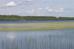 与一个充满灯心草的湖的水风景 库存照片