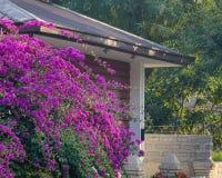 与一个农村房子的桃红色九重葛花 库存照片