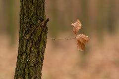与一个分支的树 库存图片