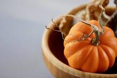 与一个卷曲词根的橙色南瓜在碗背景中 免版税图库摄影