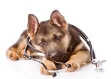 与一个听诊器的嬉戏的德国牧羊犬小狗在他的脖子 背景查出的白色 免版税库存照片
