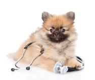 与一个听诊器的波美丝毛狗小狗在他的脖子 查出在白色 库存照片
