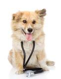 与一个听诊器的狗在他的脖子 背景查出的白色 库存图片