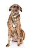 与一个听诊器的狗在他的脖子 背景查出的白色 免版税图库摄影