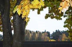 与一个壮观的橡树的秋天风景 免版税库存照片
