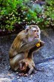 与一个婴孩的猴子猴子小山的 图库摄影
