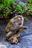 与一个婴孩的猴子猴子小山的 库存照片