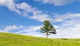 与一个孤立结构树的夏天横向 免版税库存图片