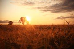 与一个孤立结构树的夏天横向 库存照片