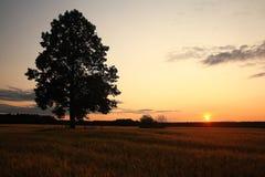 与一个孤立结构树的夏天横向 免版税图库摄影