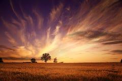 与一个孤立结构树的夏天横向 库存图片