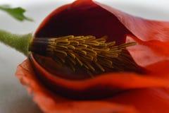 与一个宏观透镜的一朵花 库存照片