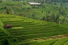 与一个小棕色村庄的绿色米领域小山在巴厘岛 免版税图库摄影