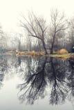 与一个小湖的冬天风景,自然 图库摄影