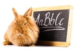 与一个小的黑板的逗人喜爱的兔宝宝 免版税库存图片