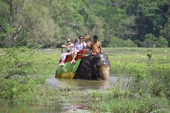 与一个小组的大象游人通过长得太大的湖做它的方式 斯里南卡 免版税库存照片
