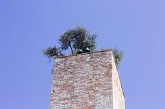 与一个庭院的钟楼屋顶的 免版税库存照片