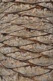 与一个抽象样式的树皮肤 免版税库存照片