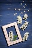 与一个木制框架的金合欢小树枝在蓝色木背景 免版税库存图片