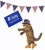 与一个标志的猫在旗子下 免版税库存照片