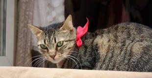 与一个桃红色蝶形领结的猫 免版税库存照片